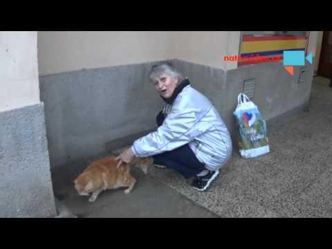 Paní  krmí venkovní kočky .