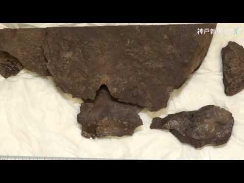 丹波市で密集した卵化石を国内初発見