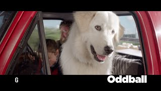 Nonton Oddball  2016  Oddball Clip 2  Hd  Film Subtitle Indonesia Streaming Movie Download
