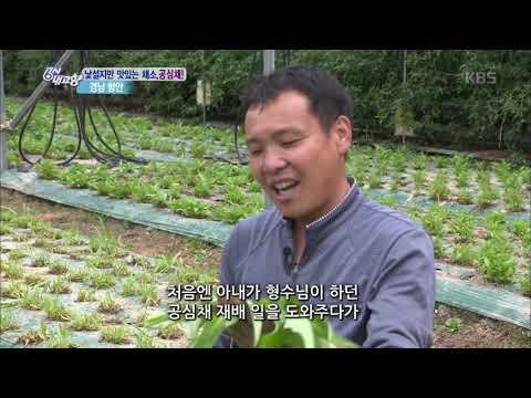 낯설지만 맛있는 채소 '공심채' - 경남 함안 [6시 내고향]20190718