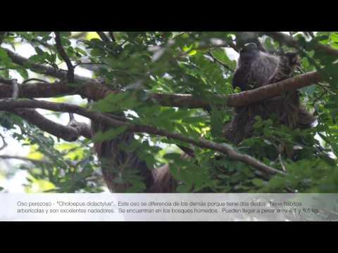 Pacific promueve el conocimiento de la biodiversidad en sus áreas de influencia