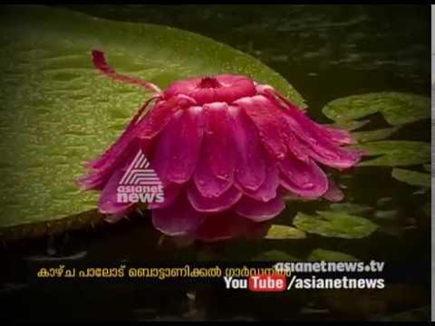 ആനത്താമര വിരിയുന്നത് കാണാം  | Asianet News Lens