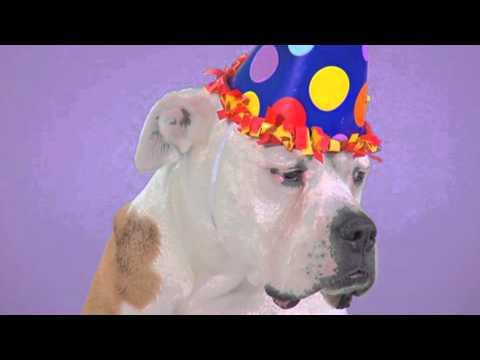 auguri di buon compleanno...anzi di bau compleanno!