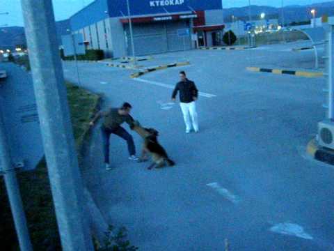 Εκπαίδευση σκύλου - Αγρίεμα - Φύλακας