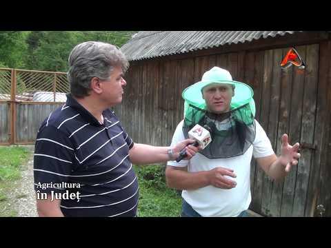 AGRICULTURA IN JUDET   Apicultura Zlatna 03 06 2012