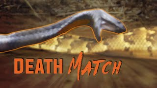 Video Deadly Snake Fight! MP3, 3GP, MP4, WEBM, AVI, FLV April 2019