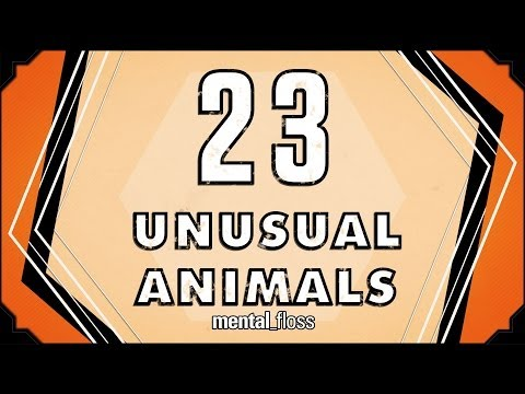 Unusual - A weekly show where knowledge junkies get their fix of trivia-tastic information. This week, we're on location at The Field Museum in Chicago with Emily Gras...