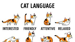HOW TO UNDERSTAND YOUR CAT BETTER