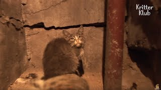 Kitten Takes Care Of Her Mom's Corpse   Animal in Crisis EP18