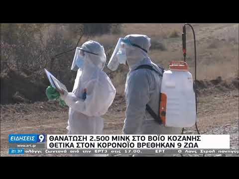 Άρχισε η θανάτωση των μινκ στην Κοζάνη | 14/11/20 | ΕΡΤ