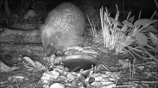 Wildlife Trail Camera - 21.9.2016