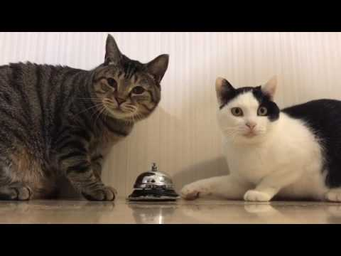 2 Cats Ring Bell For Food