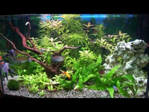 Comment construire un aquarium d 39 eau douce la r ponse for Construire un aquarium