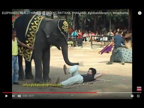 ELEPHANTS GOT TALENT, PATTAYA, THAILAND