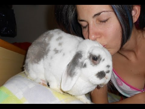 come abituare il coniglio alla lettiera - metodo infallibile