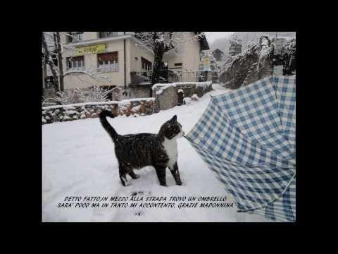 Preghiera di un gatto