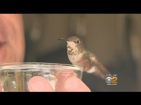 Man and his rescue dog save a Hummingbird. This is just beautiful.