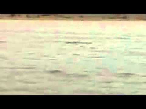 Delfín en la playa de Arrigunaga