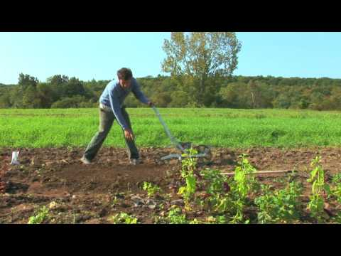Vegetable Gardening : How to Grow Spinach