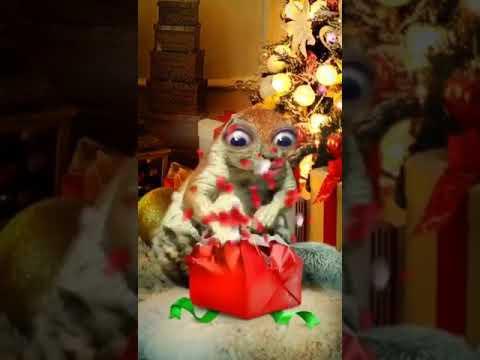 Любопытное животное открывающие подарок