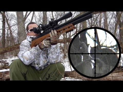 Edgun Matador R3 .25 Squirrel Hunting Review (видео)