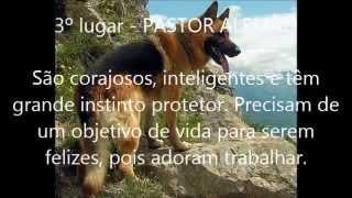 As 10 raças de cães mais inteligentes