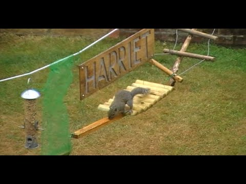 Guy Builds Squirrel Obstacle Course In His Backyard