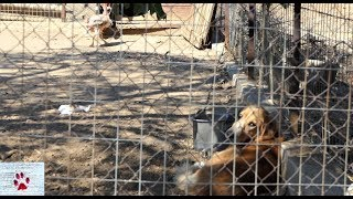 Life of dogs in the Greek countryside | vlog by The Orphan Pet