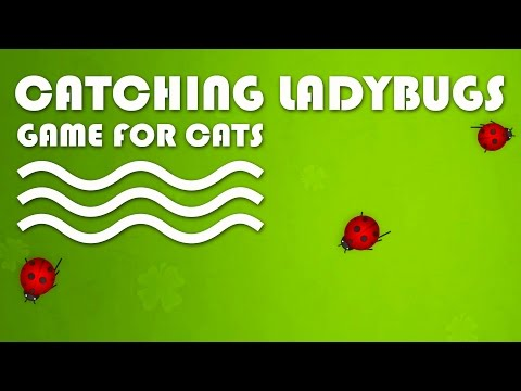 CAT GAMES ON SCREEN - Catching Ladybugs! Entertainment Video for Cats to Watch.