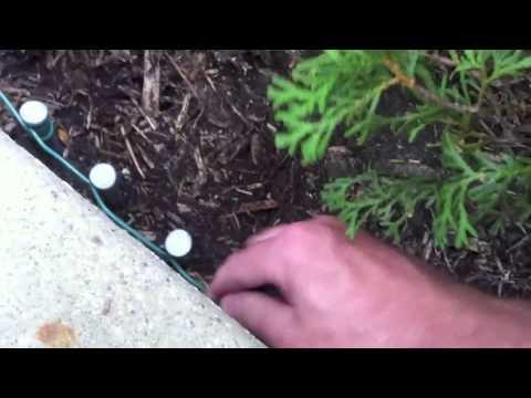 Stop Skunk digging under porch