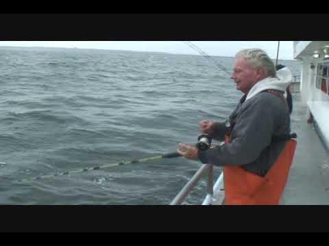 Brooklyn Blue Fish Blitz: Day 7 (видео)