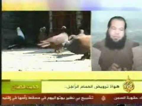 اشرف الهاشمى والحمام الزاجل على قناة الجزيرة2-1