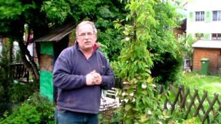 #356 Pflanzideen für Sommerkiwi