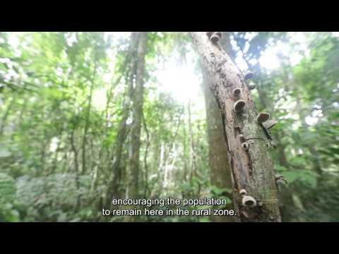 Xapuri - A Floresta Amazônica na Luta contra a Aids