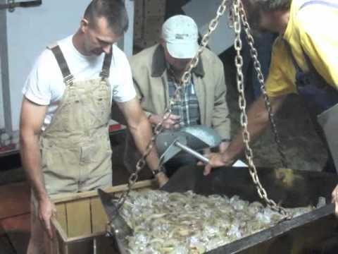 Harvesting shrimp Oct 17
