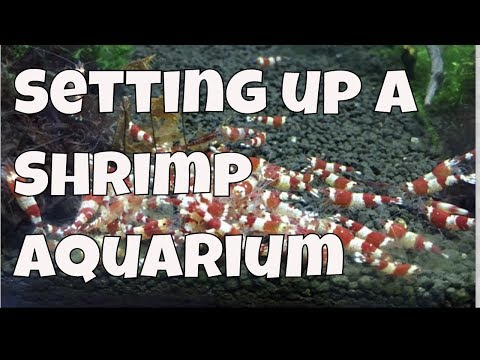 20 Long Shrimp Tank