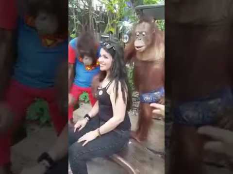 Video Naughty Monkey Pressing Hot Girls Boobs Touching | Monkey Playing with a Girl Breast | Funny Moments download in MP3, 3GP, MP4, WEBM, AVI, FLV January 2017