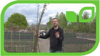 Ippenburger Gartentipp: Ein Tipi für die Süsskartoffeln