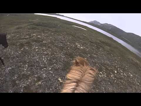 Riding icelandic horses in Greenland