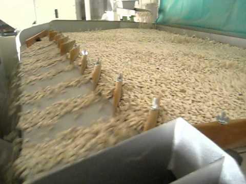 Bean Gravity Separation Egypt