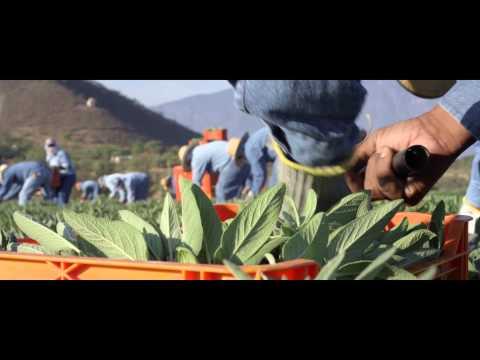Fazenda Amway Nutrilite do México