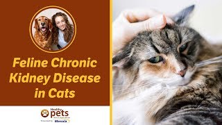 Feline Chronic Kidney Disease in Cats