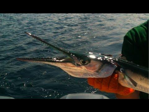ψαρεμα - Fishing for game and surf fish in the Gulf of Aden. Ψάρεμα αφρόψαρων στον Κόλπο του Άντεν.