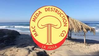 Surf Nazis, Flexy Flyers & Surfers - WindanSea Beach