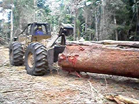 Skidder logging a large tree in a tropical forest, rain forest