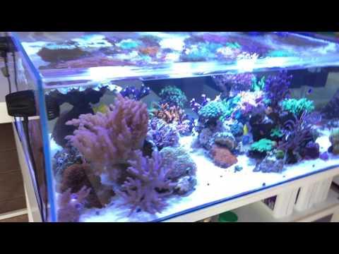 Mein Meerwasseraquarium - verbaute Technik