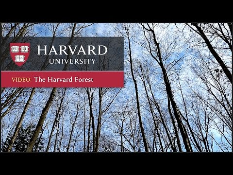 Students travel to the Harvard Forest