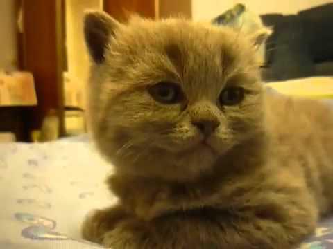 """Un gato que """"cae frito"""" de sueño"""