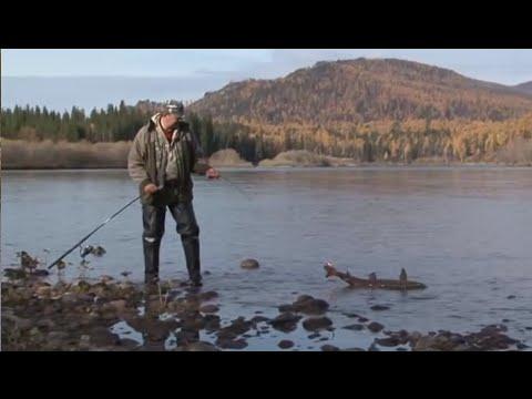 ловля ленка в сибирских реках
