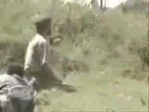 Monos Chimpancés atacan a un hombre